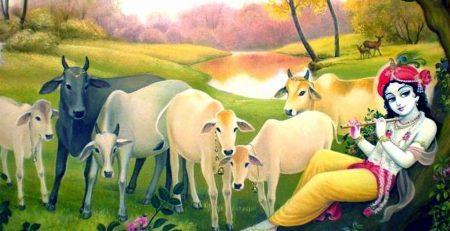गाय माता से जुड़े शुभ शकुन