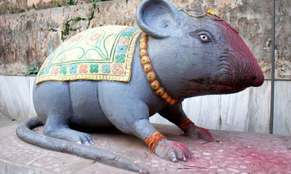 Image result for ganesh ji chuha